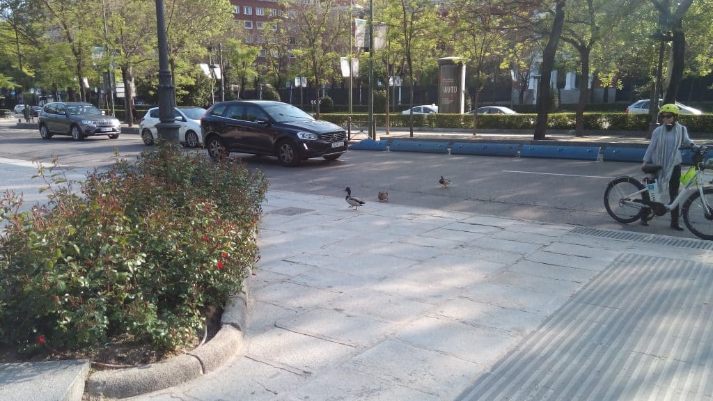 UleFone Power Patos en la Castellana
